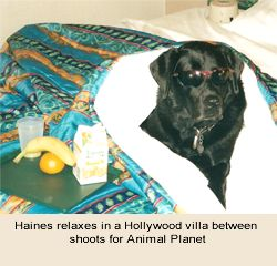 hollywoodhaines2