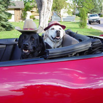 Hollywood dogs Haines and Bronco in their ride